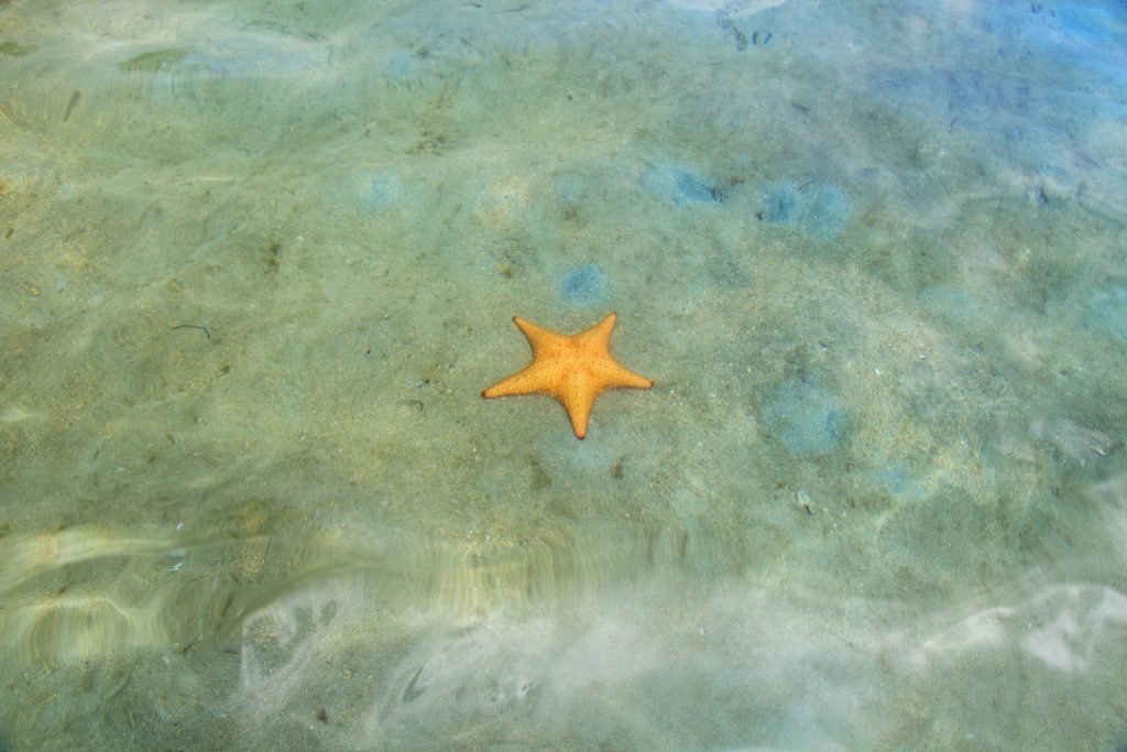 Starfish Beach at Bocas Town