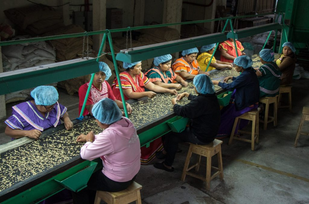 Coffee bean sorting