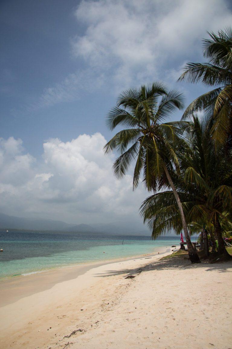 Palm trees in San Blas