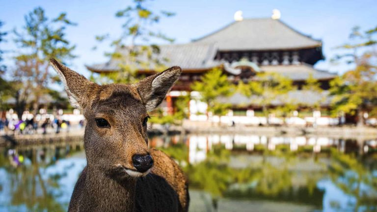 8 Best Places to Visit in Japan